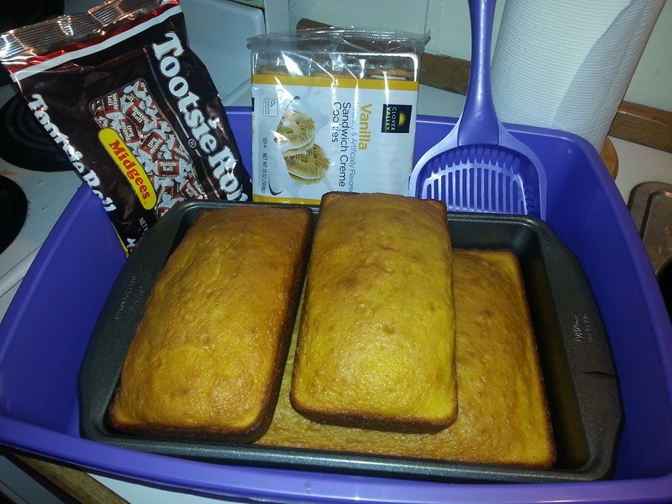 April Fool's Day Litter Box Cake
