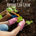 5 Easy Vegetables Anyone Can Grow