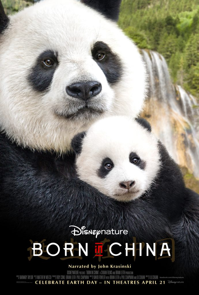 Disneynature Welcomes John Krasinski into the family as the narrator of Born In China #BornInChina